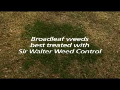 Controlling Invasive Grasses